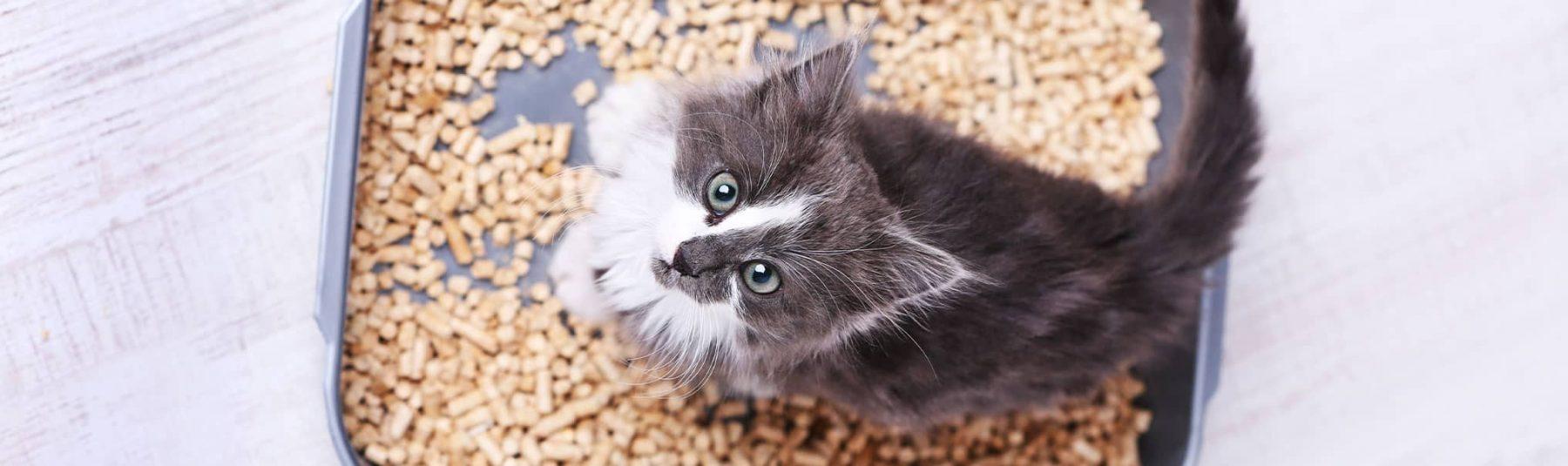 Cat Fecal Exam